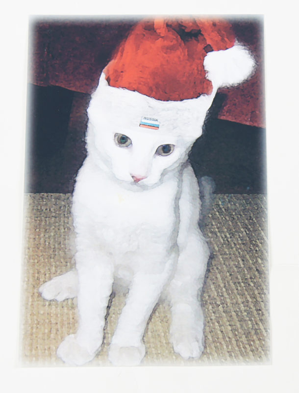 A photograph of a, thin white cat with green eyes wearing a red Santa hat.